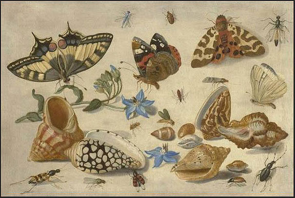 Jan van Kessel - Butterflies, shells & insects - 99199-20. http...
